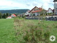 Bepflanzung im Gewann Zotteneck