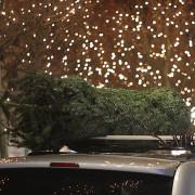Tannenbaum auf Autodach festgebunden