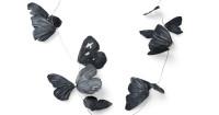 Iris Merkle Schmetterlinge