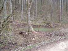 Tümpel am Trimmdichpfad